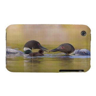 Canada, British Columbia,Common Loon, breeding iPhone 3 Cover
