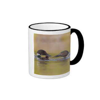 Canada, British Columbia,Common Loon, breeding Mug