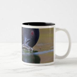 Canada British Columbia Common Loon breeding Mug