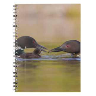 Canada British Columbia Common Loon breeding Spiral Notebook