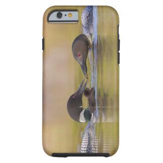 Canada, British Columbia,Common Loon, breeding Tough iPhone 6 Case