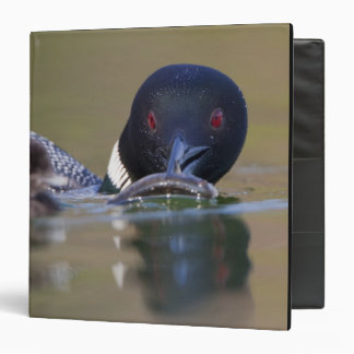 Canada, British Columbia,Common Loon, breeding Vinyl Binder