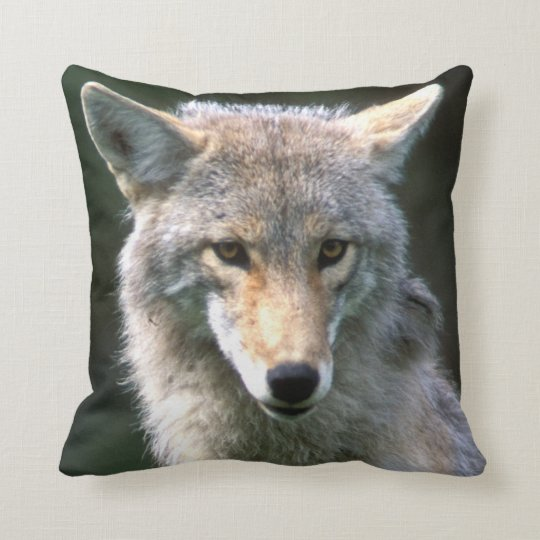 Canada, British Columbia, Coyote (Canis latrans) Throw Pillow