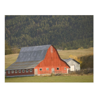 CANADA, British Columbia, Enderby. Red Barn / Postcard
