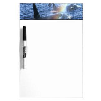 Canada, British Columbia, Johnstone Straight, Dry-Erase Whiteboards