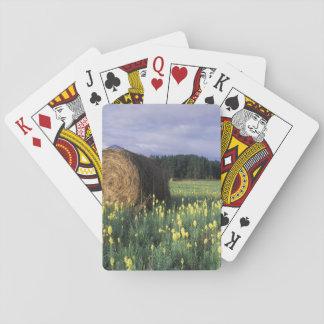 Canada, British Columbia, Kitwanga. Yellow Playing Cards