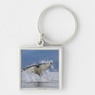 Canada, British Columbia, Vancouver Island, Key Chains