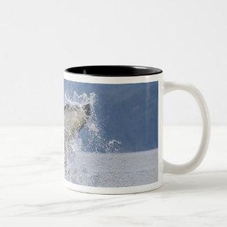 Canada, British Columbia, Vancouver Island, Mug