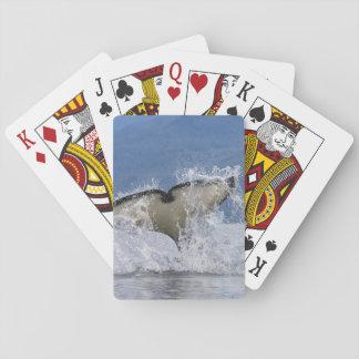 Canada British Columbia Vancouver Island Poker Deck