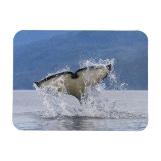 Canada, British Columbia, Vancouver Island, Rectangular Photo Magnet