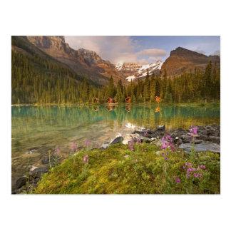 Canada, British Columbia, Yoho National Park. 2 Postcard