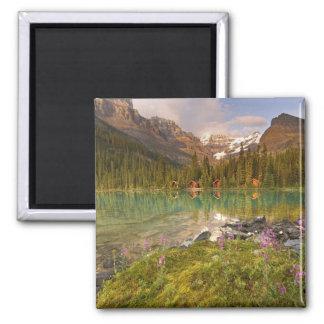 Canada, British Columbia, Yoho National Park. 2 Square Magnet
