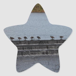 Canada Geese All In A Row Star Sticker