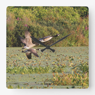 Canada Geese in Flight Square Wall Clock