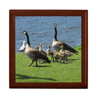 Canada Geese on the Grass by the Water Gift Box