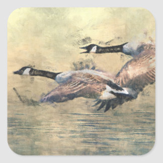 Canada Geese Square Sticker