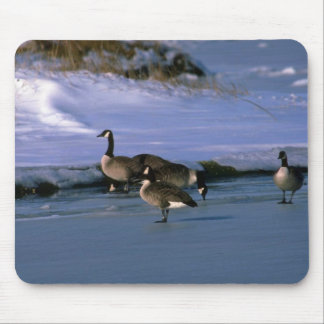 Canada Geese, standing on ice Mouse Pad