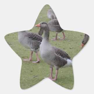 Canada Geese Star Sticker