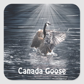 Canada Goose Bathing in a Lake Art Design Square Sticker