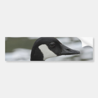 Canada goose bumper sticker