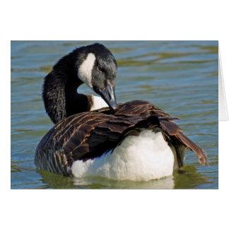Canada goose card