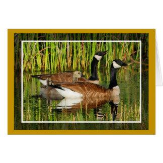 Canada Goose Family Card