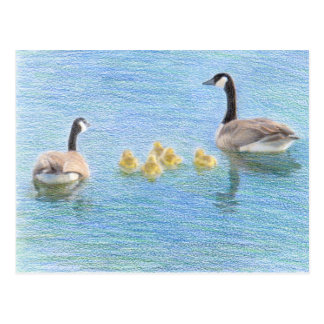 Canada Goose Family Fine Art Nature Postcard