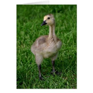 Canada Goose Gosling Notecard