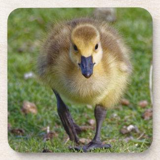 Canada Goose Gosling Walking Coaster