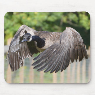 Canada Goose In Flight Mouse Pad
