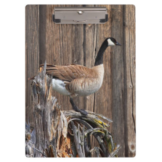 CANADA GOOSE ON BARN BOARD CLIPBOARDS