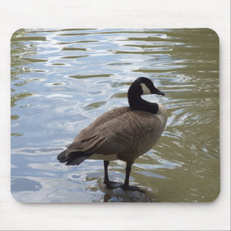 Canada Goose On Rock Mouse Pad