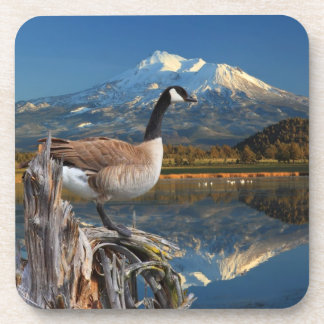 CANADA GOOSE ON THE LAKE DRINK COASTERS