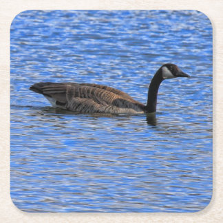 CANADA GOOSE ON WATER SQUARE PAPER COASTER