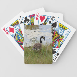 Canada Goose Playing Cards