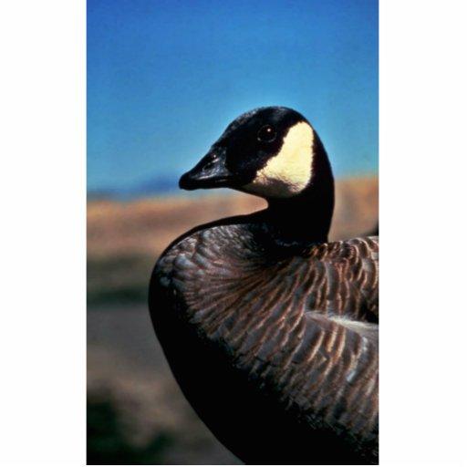 Canada goose portrait photo sculpture