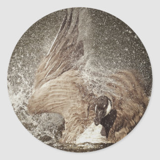 Canada Goose Slapping Water Photographic Art Classic Round Sticker
