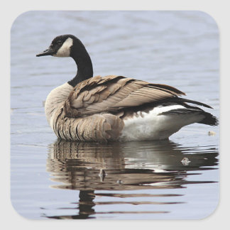 Canada Goose Square Sticker