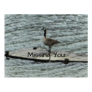 Canada Goose Standing Dock Postcard