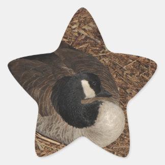 Canada Goose Star Sticker