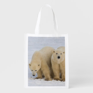 Canada, Hudson Bay. Polar bear mother with two Grocery Bag