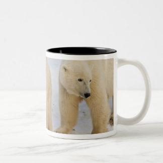Canada, Hudson Bay. Polar bear mother with two Two-Tone Coffee Mug