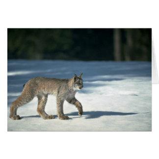 Canada lynx on snow card