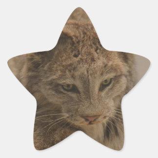 Canada Lynx Star Sticker