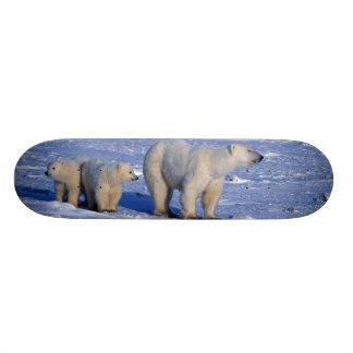 Canada, Manitoba, Churchill. Polar bear mother Skateboard