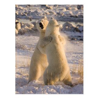 Canada, Manitoba, Hudson Bay, Churchill. 2 Postcard
