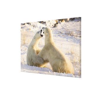 Canada, Manitoba, Hudson Bay, Churchill. 2 Stretched Canvas Print
