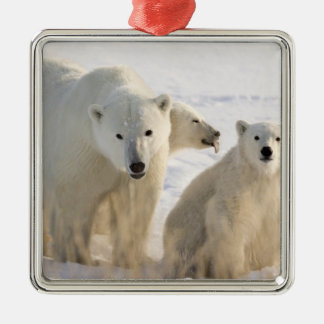 Canada, Manitoba, Hudson Bay, Churchill. 5 Metal Ornament