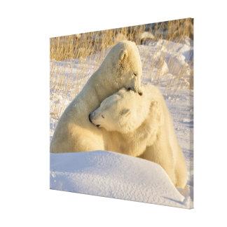 Canada, Manitoba, Hudson Bay, Churchill. 9 Gallery Wrapped Canvas
