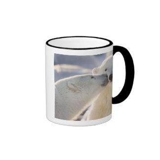 Canada, Manitoba, Hudson Bay, Churchill. Polar Ringer Coffee Mug